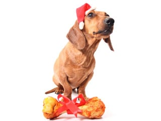 You may think the devil (or angel) costume is particularly fitting for your pet at Halloween, but unless you know your pet loves it, refrain from dressing him up. This includes dressing him like Santa later on. (©iStockphoto.com/LuisCarlosTorres)